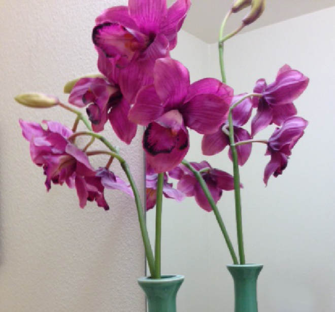 Photo of flowers for theta healing practitioner's blog post on being nice